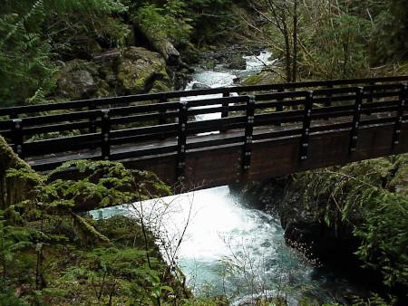 Olympic Rainforest, Washington