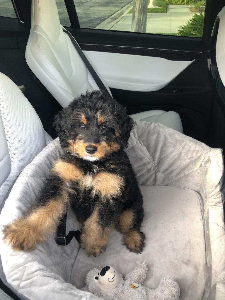 Tesla Dog Mode & a new seat